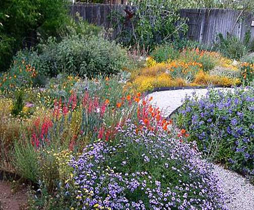 Landscaping With Native Plants : California native plants garden tips coloradoboulevard