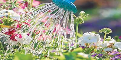 California native plants garden tips for Less maintenance plants