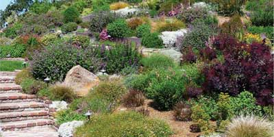 Native Plants Variety Idea